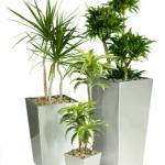 3-silver-pots