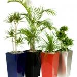 4-large-pots